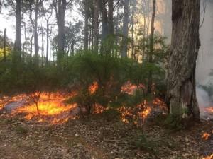 Bushfire WA